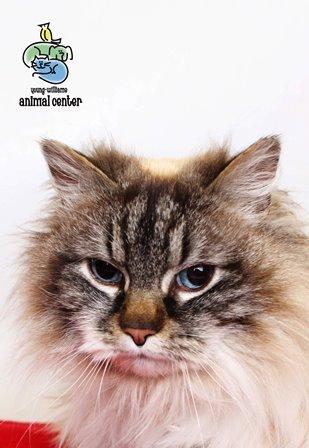 Young-Williams Animal Center celebrates 'Cinco De Gato' with cat special