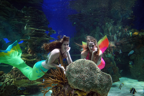 Mermaids swimming daily at Ripley's Aquarium of the Smokies